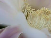 Flor del primer del cactus Imagen de archivo libre de regalías