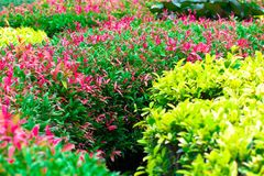 Flor del punto de la hoja en sumer sping después de llover por la mañana imagen de archivo libre de regalías