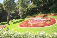 Flor del reloj, Valparaiso, Vina Del Mar, Chili Images libres de droits