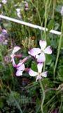 Flor del resorte Fotografía de archivo