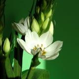flor del resorte foto de archivo libre de regalías
