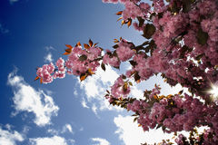 Flor del resorte Fotos de archivo libres de regalías