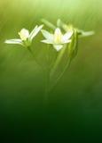Flor del resorte en el campo Imagen de archivo