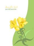 Flor del resorte. Freesia 3 Fotografía de archivo