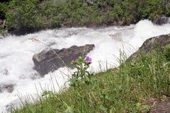 Flor del resorte - Montana Fotografía de archivo