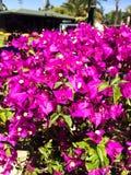 Flor del rododendro, flor rosada fotos de archivo