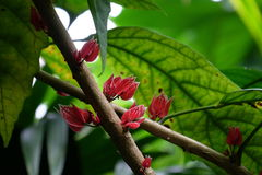 Flor del rojo de la selva tropical Imágenes de archivo libres de regalías