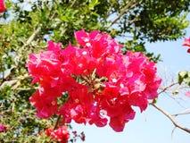 Flor del rojo del árbol Fotos de archivo libres de regalías