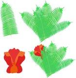 Flor del ` s del helecho y del helecho de la magia ilustración del vector