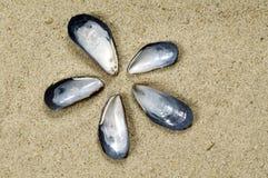 Flor del shell en la arena Imagen de archivo libre de regalías