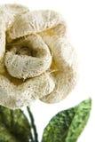 Flor del sisal Fotos de archivo libres de regalías