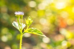 Flor del soporte de la hierba solamente en el parque Fotografía de archivo