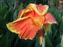 Flor del tubo Fotos de archivo libres de regalías