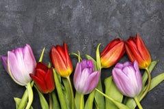 Flor del tulipán en el fondo oscuro, espacio de la copia imagen de archivo