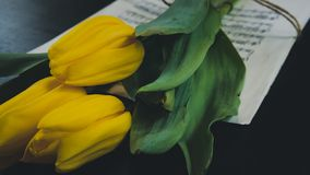 Flor del tulip?n en una hoja de viejas notas musicales sobre el fondo del dlack foto de archivo