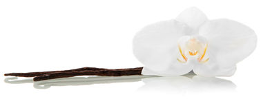 Flor del vanila de la orquídea Fotos de archivo libres de regalías