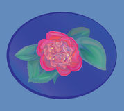 Flor del vector Foto de archivo libre de regalías