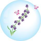 Flor del vector del jacinto Fotos de archivo