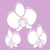 Flor del vector Orquídea en color rosado Foto de archivo