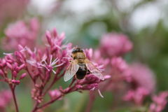 Flor del verano Imagen de archivo
