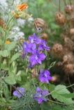 Flor del verano Imagen de archivo libre de regalías