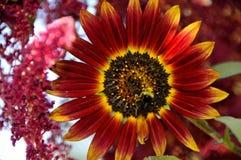 Flor del verano con la abeja Imágenes de archivo libres de regalías