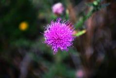 Flor del verano en foto macra Imagen de archivo