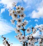 Flor del verano en la plena floración Imagen de archivo libre de regalías