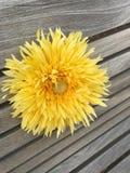 Flor del verano en un banco imagen de archivo