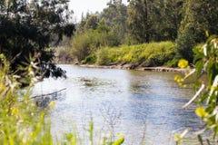Flor del verde de la primavera del río de Sorek del Riverbank imagenes de archivo