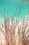 Flor del vintage de la hierba Foto de archivo libre de regalías