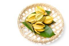 Flor del Ylang-Ylang, flor fragante amarilla imagen de archivo
