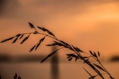 Flor delante de la puesta del sol Fotos de archivo