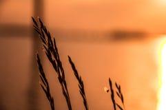 Flor delante de la puesta del sol Imágenes de archivo libres de regalías