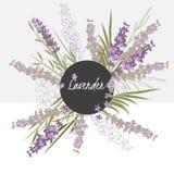 Flor delicada da alfazema da ilustração Imagens de Stock