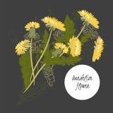 Flor delicada do dente-de-leão da ilustração ilustração stock