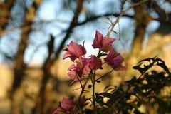 Flor delicada em meu rancho ilustração royalty free