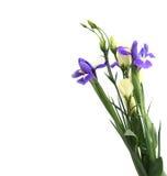 Flor delicada em um branco imagens de stock