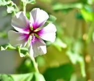 Flor delicada em um dia ensolarado foto de stock