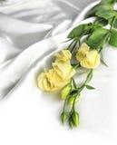 Flor delicada en un blanco foto de archivo libre de regalías