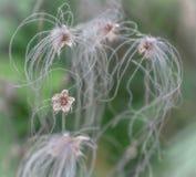 Flor delicado secada fotografia de stock