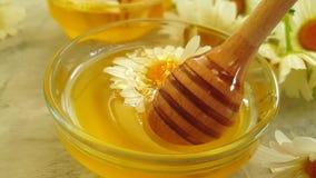 Flor deliciosa de la miel de la nutrición de la margarita del verano delicioso de cristal fresco de la cámara lenta en fondo conc almacen de metraje de vídeo