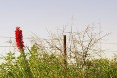 Flor derecha roja imagen de archivo