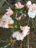 Flor descolorada Fotografía de archivo libre de regalías