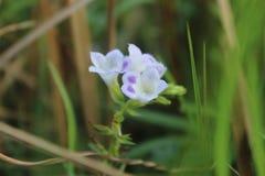 Flor desconhecida imagens de stock