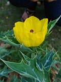 Flor desconocida en la universidad de Bengala del norte imagen de archivo libre de regalías