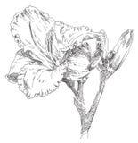 Flor desenhada mão ilustração stock