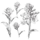 Flor desenhada mão Imagem de Stock Royalty Free