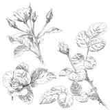 Flor desenhada mão Imagens de Stock Royalty Free