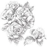 Flor desenhada mão Foto de Stock Royalty Free